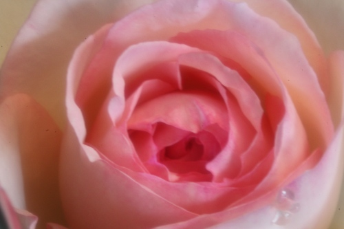 薔薇のライト